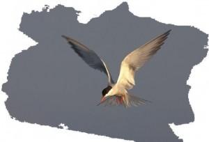 """Voorjaarslezing Vogelbeschermingswacht """"Zaanstreek"""""""